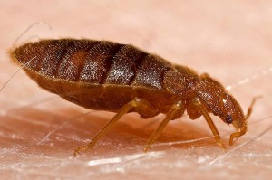 Sunrise Bed Bug Control